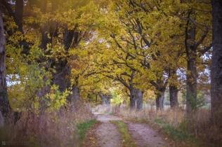 _20151023_Saldus_rudens_0165