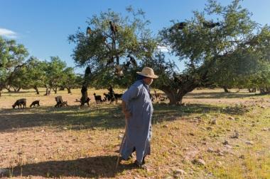 Marakešā būts, Zivju tirgus nobaudīts un arī pēdējo no ķeksīšiem varam ievilkt - kazas kokā.
