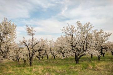 Noteikti ir vērts atgriezties Bulgārijā arī rudenī, kad ziedošo ābeļu mākoņi un vīnogulāju lauki ir ogu pilni.